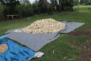 The Water Project: Mukhuyu Community, Gideon Kakai Chelagat Spring -  Sundrying Maize