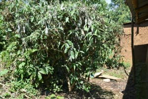 The Water Project: Lunyinya Community, Makunga Spring -  Bathing Shelter Behind Trees