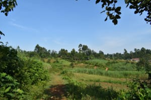 The Water Project: Lunyinya Community, Makunga Spring -  Community Landscape