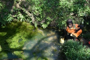 The Water Project: Lunyinya Community, Makunga Spring -  Fetching Water From The Spring