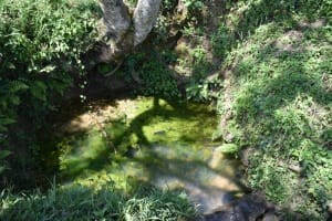 The Water Project: Lunyinya Community, Makunga Spring -  Makunga Spring Thick With Algae