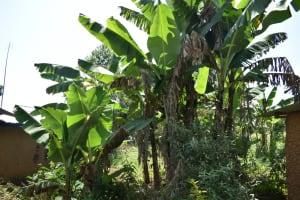The Water Project: Lunyinya Community, Makunga Spring -  Banana Farming