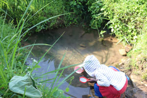 The Water Project: Mwera Community, Mukunga Spring -  Fetching Water From The Spring