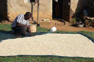 The Water Project: Mwera Community, Mukunga Spring -  Joys Dad Ensuring The Maize Dries Evenly