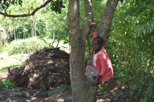The Water Project: Makunga Community, Tabarachi Spring -  A Child Climbing A Tree