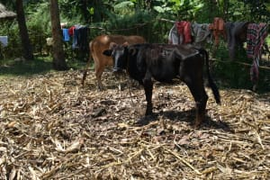 The Water Project: Makunga Community, Tabarachi Spring -  Animal Pen