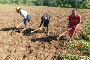The Water Project: Ikoli Community, Odongo Spring -  Farming Is The Major Activity