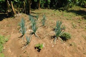 The Water Project: Mushikulu B Community, Olando Spring -  Healthy Vegetable Corner