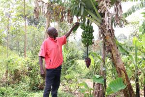 The Water Project: Handidi Community, Kadasia Spring -  Checking On The Bananas