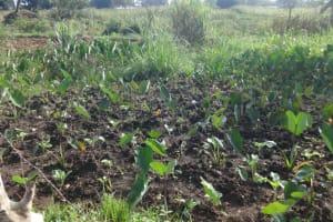 The Water Project: Isanjiro Community, Musambai Spring -  Arrowroots Farm