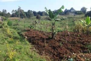 The Water Project: Isanjiro Community, Musambai Spring -  Farm