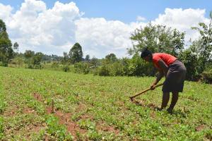 The Water Project: Shianda Commnity, Mukeya Spring -  Farming