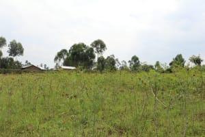 The Water Project: Shamoni Community, Laban Ang'ata Spring -  Cassava Plantation