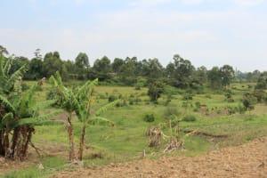 The Water Project: Shamoni Community, Laban Ang'ata Spring -  Landscape