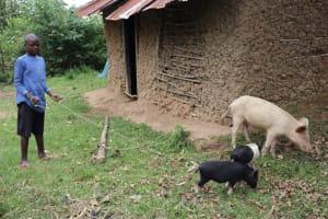 The Water Project: Shamoni Community, Laban Ang'ata Spring -  Pius Grazing The Pigs