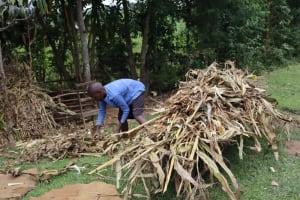The Water Project: Shamoni Community, Laban Ang'ata Spring -  Finding Animal Feed