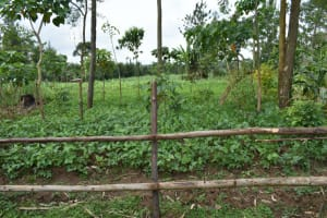 The Water Project: Malekha Central Community, Misiko Spring -  Bean Farm