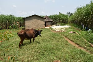 The Water Project: Malekha Central Community, Misiko Spring -  Compound