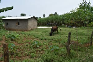 The Water Project: Malekha Central Community, Misiko Spring -  Garden