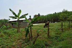 The Water Project: Malekha Central Community, Misiko Spring -  Kitchen Garden