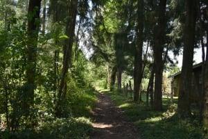 The Water Project: Shamoni Community, Shatuma Spring -  Lush Landscape