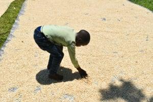 The Water Project: Shamoni Community, Shatuma Spring -  Sundrying Maize