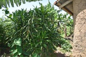 The Water Project: Shianda Community, Akhonya Spring -  Bathing Shelter
