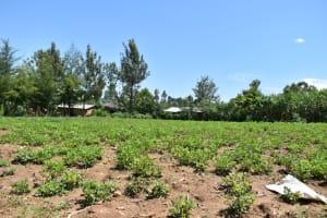 The Water Project: Shianda Community, Akhonya Spring -  Community Farmland