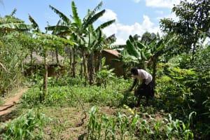 The Water Project: Shianda Community, Akhonya Spring -  Farming