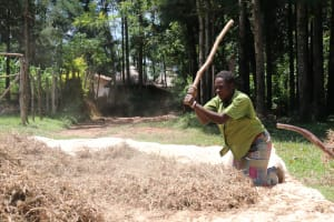 The Water Project: Elwichi Community, Mulunda Spring -  Miss Ruth Beating Bean Pods To Harvest Beans
