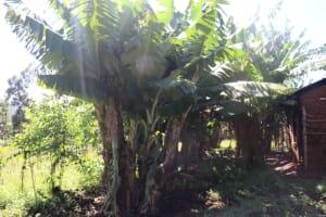 The Water Project: Lukala West Community, Luka Spring -  Banana Plantation