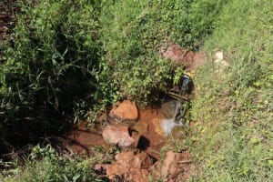 The Water Project: Lukala West Community, Luka Spring -  Unprotected Spring