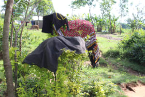 The Water Project: Litinye Community, Vuyanzi Spring -  Clothes Drying On Bushes