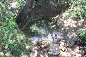 The Water Project: Luyeshe Community, Khausi Spring -  Spring Full Of Algae And Leaves