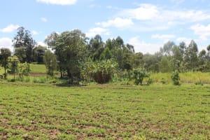 The Water Project: Kalenda A Community, Sanya Spring -  Farmlands