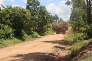 The Water Project: Kalenda A Community, Sanya Spring -  Transporting Harvested Sugarcane
