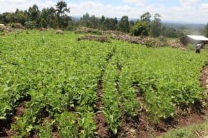 The Water Project: Kalenda A Community, Sanya Spring -  Groundnut Farm