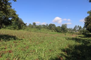 The Water Project: Lukala West Community, Angatia Spring -  Farmlands