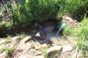 The Water Project: Lukala West Community, Angatia Spring -  Unprotected Spring