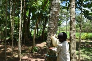 The Water Project: Malekha West Community, Soita Spring -  Handwashing Station
