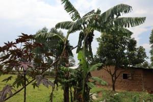 The Water Project: Bukhaywa Community, Violet Inganji Spring -  Banana Plantation