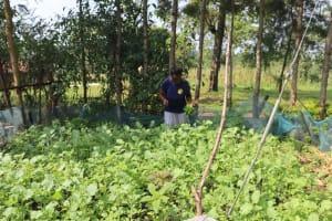The Water Project: Bukhaywa Community, Violet Inganji Spring -  Harvesting Kale