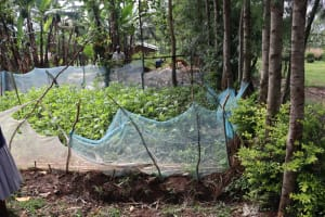 The Water Project: Bukhaywa Community, Violet Inganji Spring -  Kitchen Garden