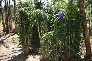 The Water Project: Shianda Community, Govet Lumbasi Spring -  The Bathing Area