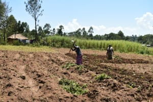 The Water Project: Shianda Community, Govet Lumbasi Spring -  Women Tilling A Farm