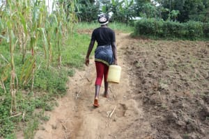 The Water Project: Makhwabuyu Community, Shirandula Spring -  Carrying Water
