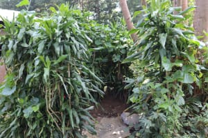 The Water Project: Makhwabuyu Community, Shirandula Spring -  Bathing Shelter Inside Bushes