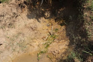 The Water Project: Makhwabuyu Community, Shirandula Spring -  Mossy Area Where Spring Originates