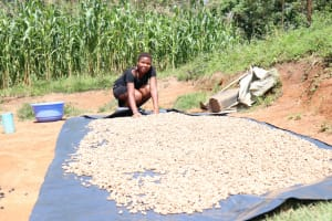The Water Project: Emukangu Community, Okhaso Spring -  Spreading Groundnuts Out To Dry