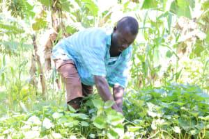 The Water Project: Eshiasuli Community, Eshiasuli Spring -  Weeding His Potato Farm